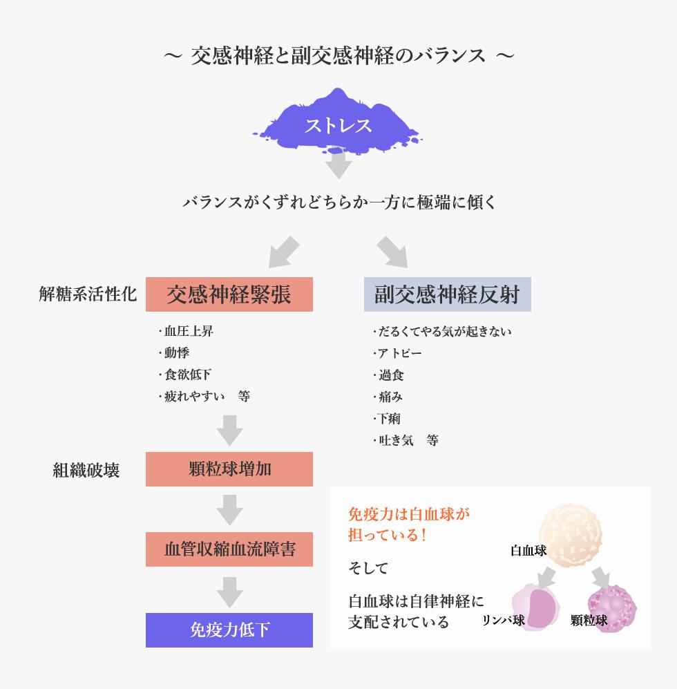 〜 交感神経と副交感神経のバランス 〜